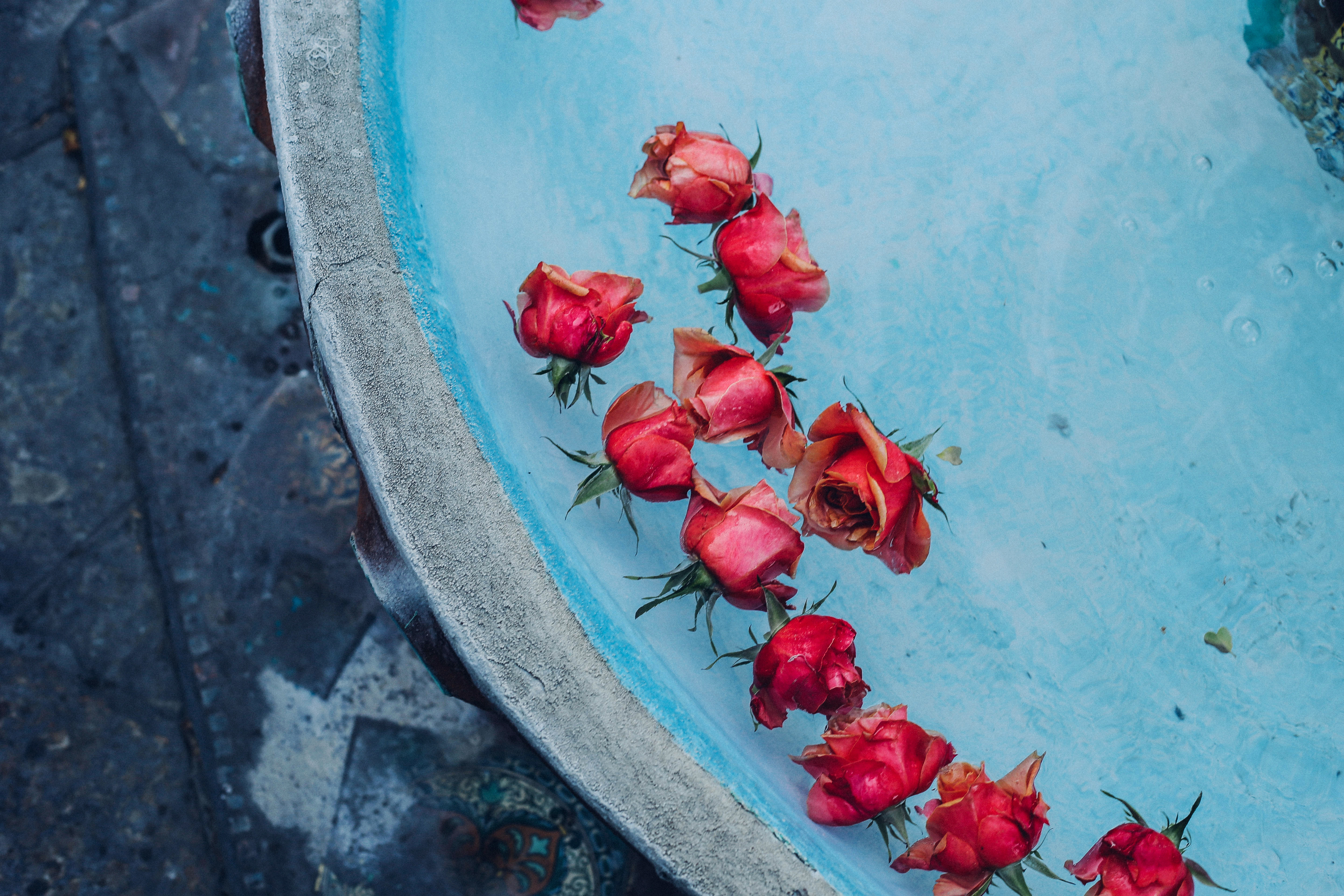 Roses in a Fountain